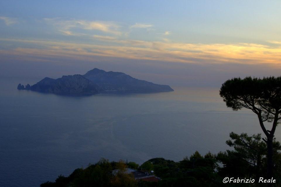 Capri ed un pino al tramonto, panorama dal Relais Blu